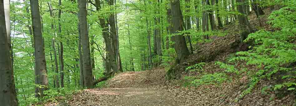 wunderschöner Sommerwald im Harz