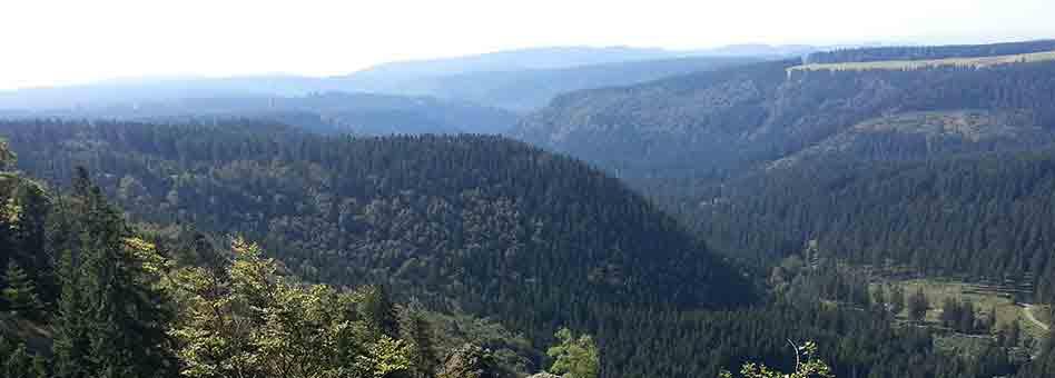 Klippen im Harzer Naturschutzgebiet