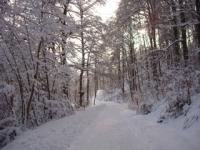 Winterlandschaft direkt vor der Tür