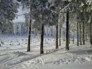 Ein Wintermärchen am Wurmberg